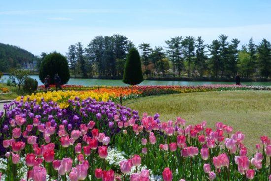 木曽三川公園のチューリップの見ごろは?祭りは?アクセス ...